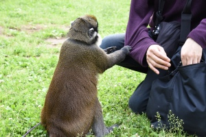 Hanako begging to his owner's friend